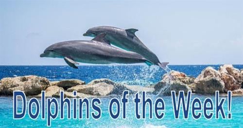 Dolphins of the Week